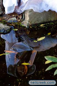 creek-090903-089