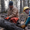 Nov 10 - Simon and I cut and blocked 4 trees. We'll leave the splitting to younger backs who like doing it.
