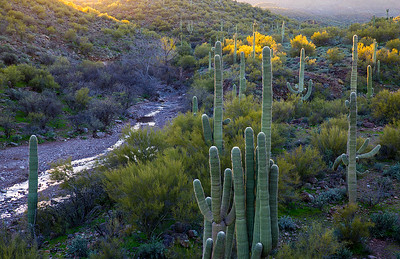 February 2018 Sonoran Desert. Cottonwood Creek, Hells Canyon Wilderness.
