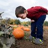 Cottonwood Pumpkin Patch