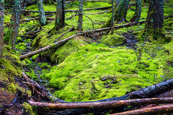 Wet Vegetation, Glacier NP, MT (CP-156-2014-05-29)