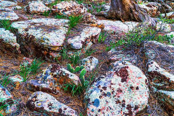 Rocks, Rabbit Mountain, Boulder County, CO (CP-139-2013-05-12)