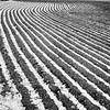 Spring Snow on Plowed Field