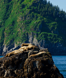 Sea lions were plentiful, enjoying the warm, sunny day.  The large males can weigh a ton or more.