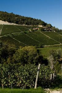 Piedmont-25