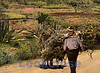 Hauling Cornstalks, Road to Hierve el Agua, Oaxaca, MX