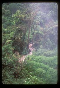 Path through the steamy jungle in Iguazu Falls National Park, Argentina.