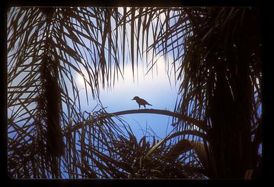 Small bird on a branch, Iguazu Falls National Park, Argentina.