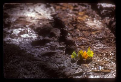 Butterflies, Iguazu Falls National Park, Argentina.