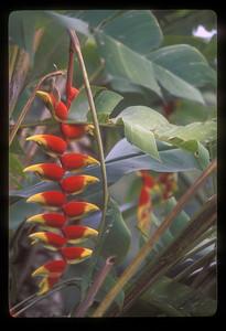 Tropical plants, Iguazu Falls National Park, Argentina.