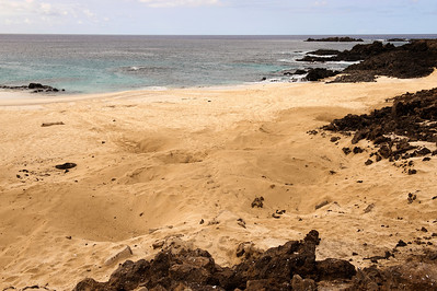 The depressions are areas where turtles have burrowed to lay eggs. English Bay, Ascension Island.