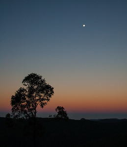 Springbrook National Park at dusk