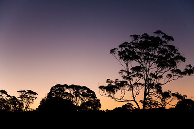 Evening Calm, Springbrook National Park, Australia
