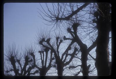 Trees in winter, Bruges, Belgium.