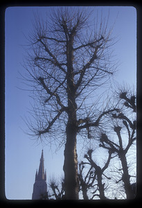 Trees and church spire, Bruges, Belgium.