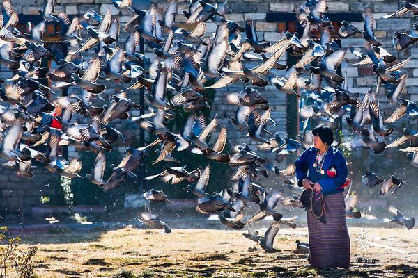 Feed time at Thimphu