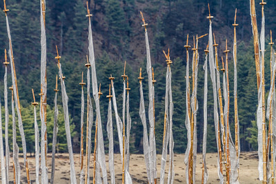 Prayer Flag Poles Stand In Front Of A Forest, Phobjika Valley, Bhutan