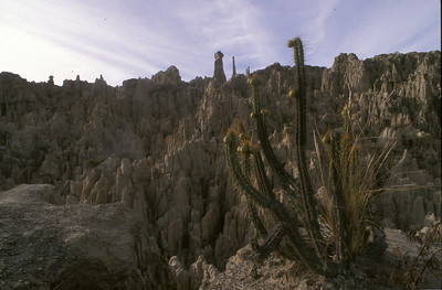 Cactus in devil's canyon, Bolivia.