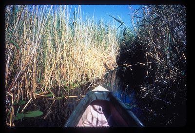 Makoro in the reeds, Okavango delta region of Botswana.