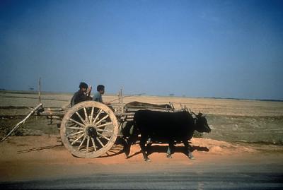 Bullock cart, rural Burma.