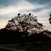 Siem Reap - Sunset at grounds of Angkor Wat