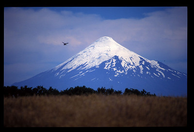 Bird and Mt. Osorno, the lakes region of Chile.