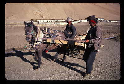Local transport in Tinggri village, Tibet.