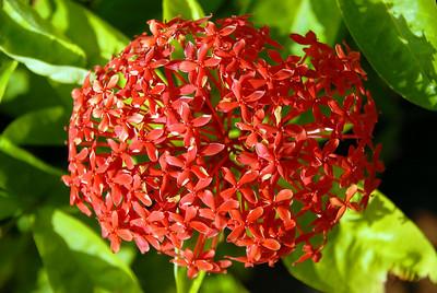 Flower, Hainan Island, China.