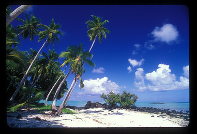 Motu near Aitutaki, Cook Islands.