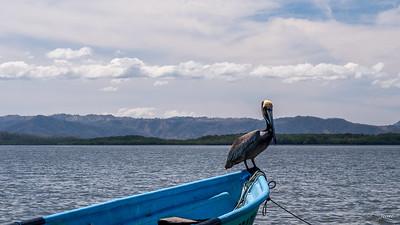 Oiseau IMG_3657