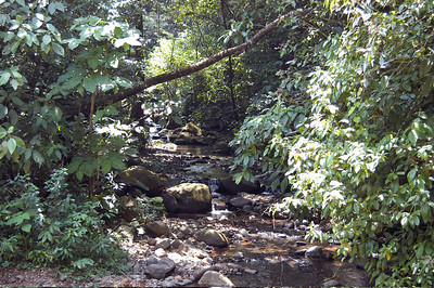 Creek in rural northern Costa Rica.