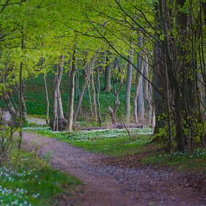 Flojstrup forest, Denmark