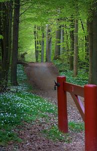 Flojstrup forest