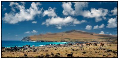 Wild Horses, Easter Island (Rapa Nui).