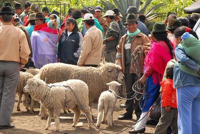 Animal Market, Ecuador