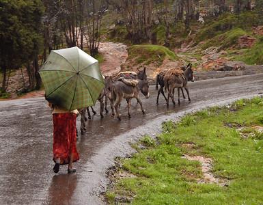 Pack animals, rural Ethiopia.