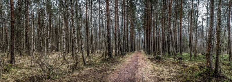 Moody Forest Trail
