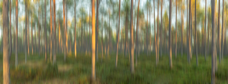 Blurred Forest Glow