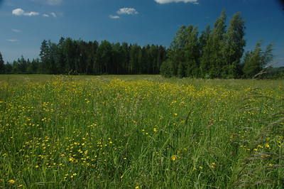 Field in summer, Finland.