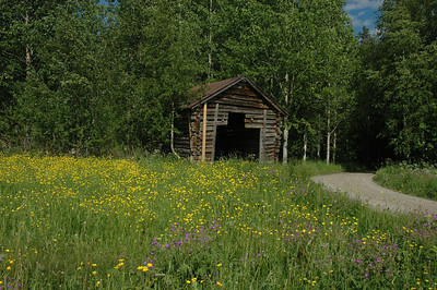 Shed, flowers and country lane, farm in Finland.