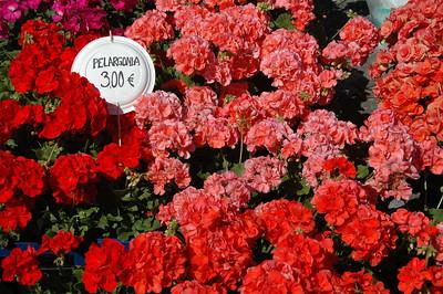 Flowers for sale at Savonlinna, Finland.