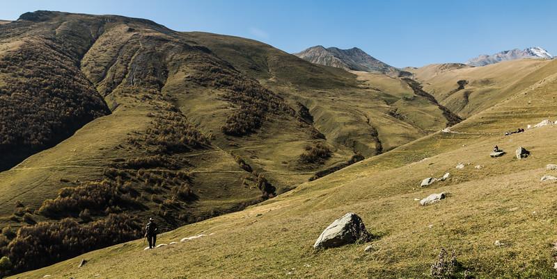 Shepherd Walking