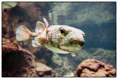 Fish in the Berlin, Germany aquarium.