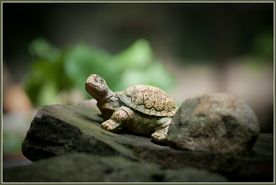 A fat turtle in the little zoo in Chorin, Brandenburg, Germany.