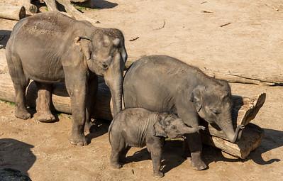 Cologne Elephant family