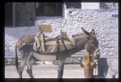 Local transport, Hydra, Greek Isles.