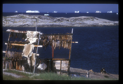 Dried fish, furs, husky and icebergs. You can get it all in Ilullisat, Greenland.