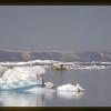 Fisherman near Ilullisat, Greenland.