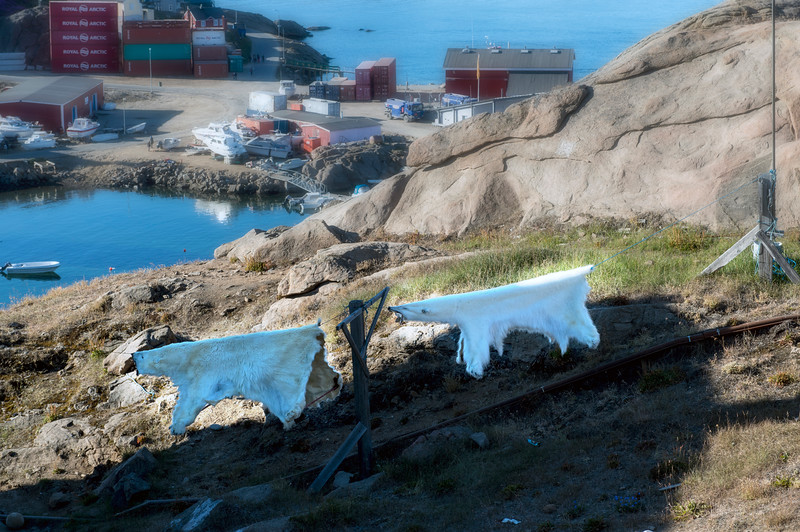 Bearskins on the line in Tasiilaq, east Greenland.