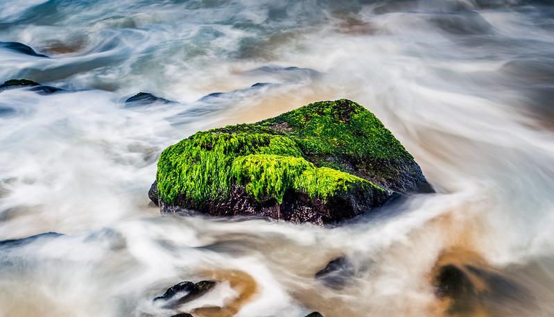 Rock Covered in Algae